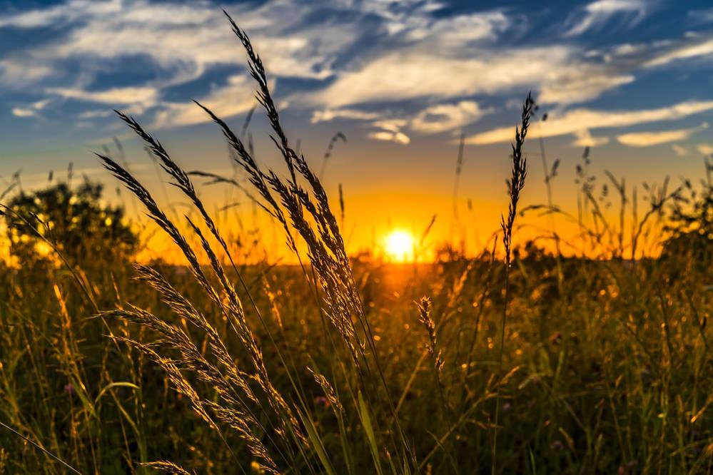 Czym jest integrowana ochrona roślin?